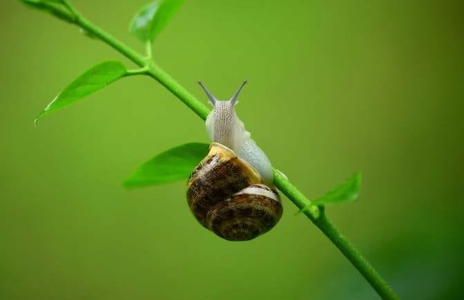 Job interview snail brainteaser